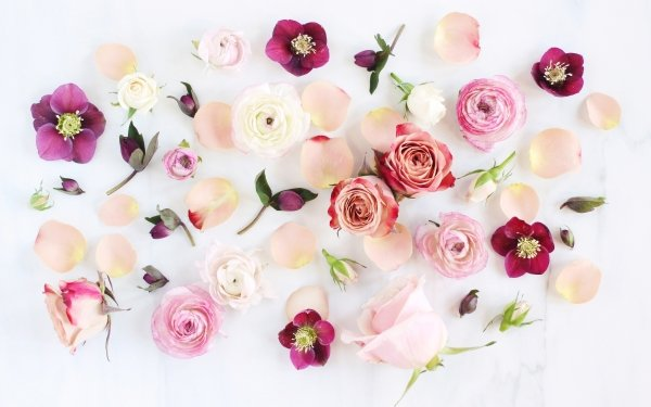 Artistic Flower Flowers Rose Anemone Peony White Flower Pink Flower HD Wallpaper   Background Image