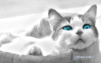 Animal - Cat Wallpapers and Backgrounds ID : 82330