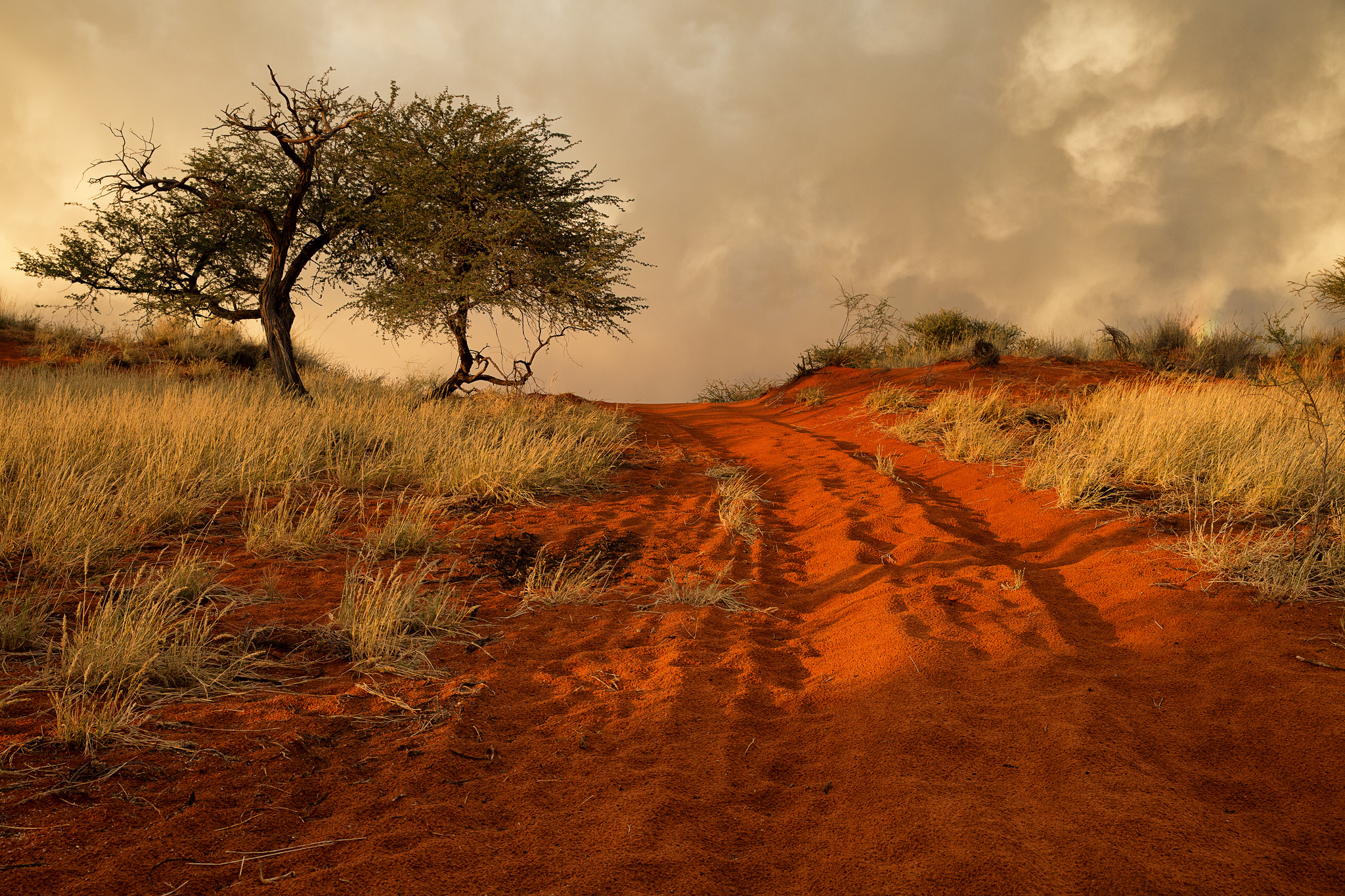 Dirt Road In The African Savanna Full Hd Wallpaper And HD Wallpapers Download Free Images Wallpaper [1000image.com]
