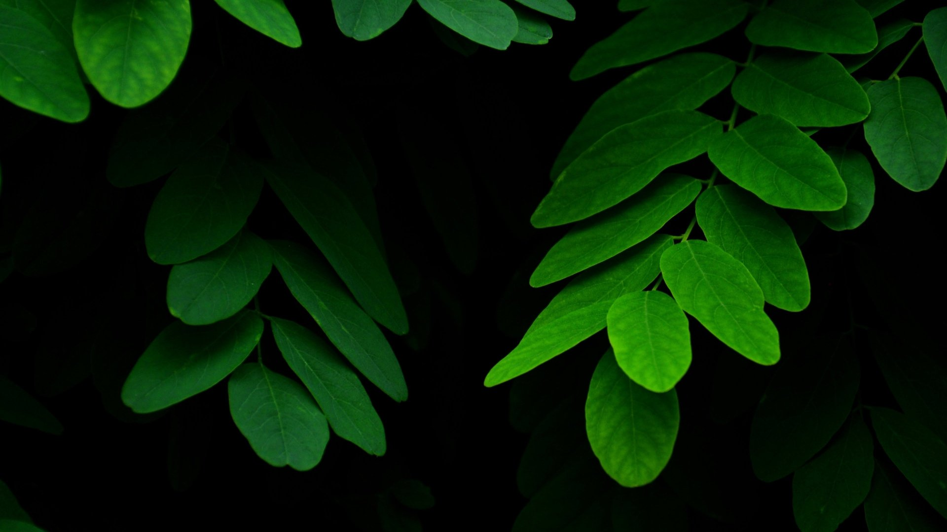 Green Leaves 4k Ultra Hd Wallpaper Background Image
