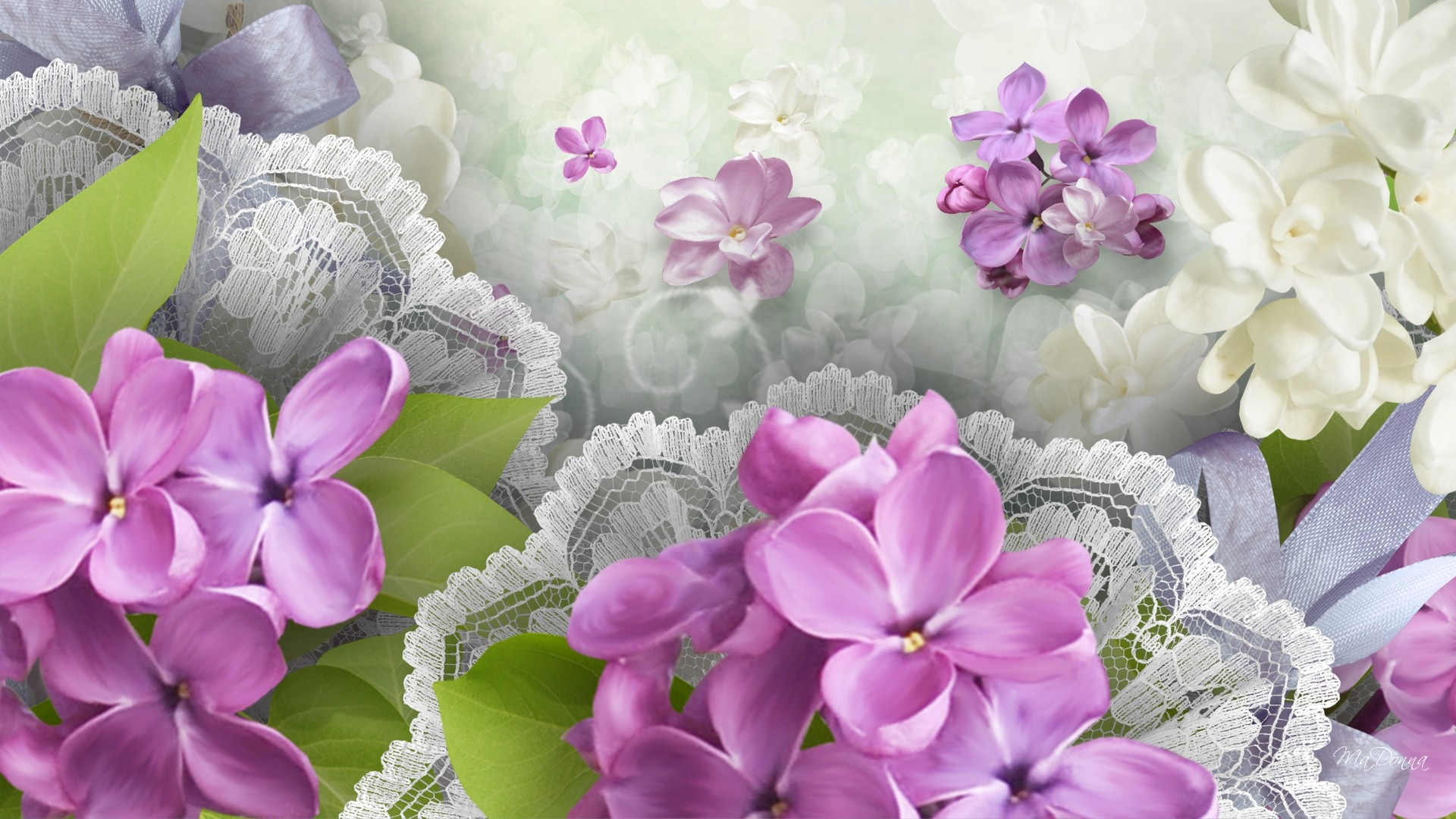 Lilacs and lace full hd wallpaper and background image for Lilac butterfly wallpaper