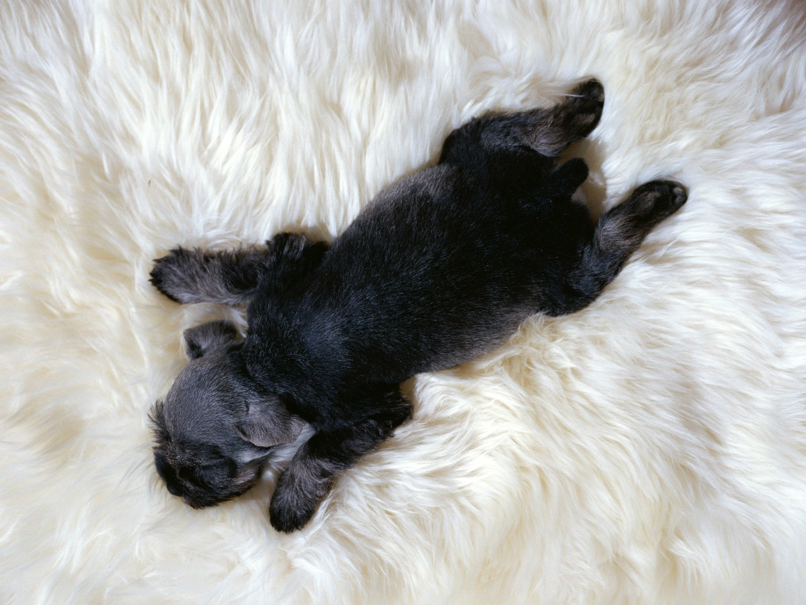 Animal - Dog  Sleeping Cute Baby Animal Wallpaper