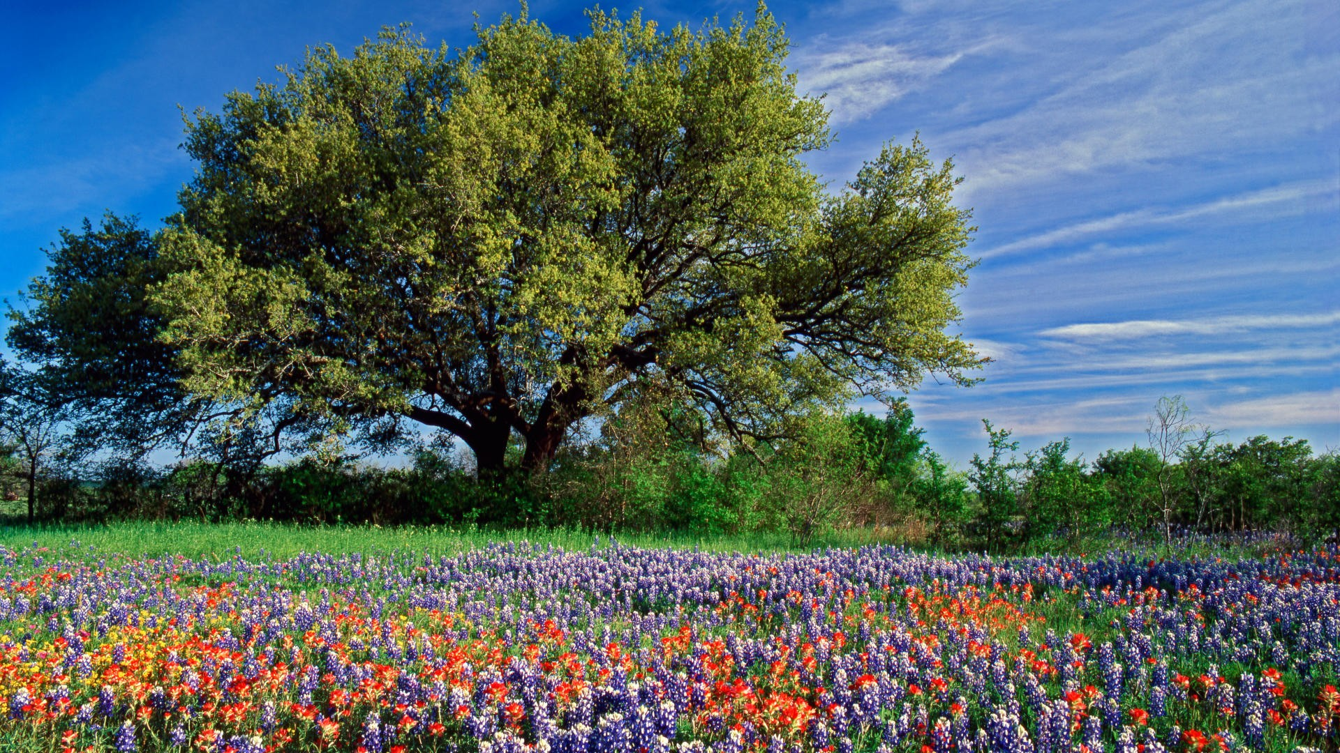Flowers In Spring Field Hd Wallpaper Background Image 1920x1080
