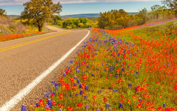 Man Made Road Spring Flower Texas HD Wallpaper   Background Image