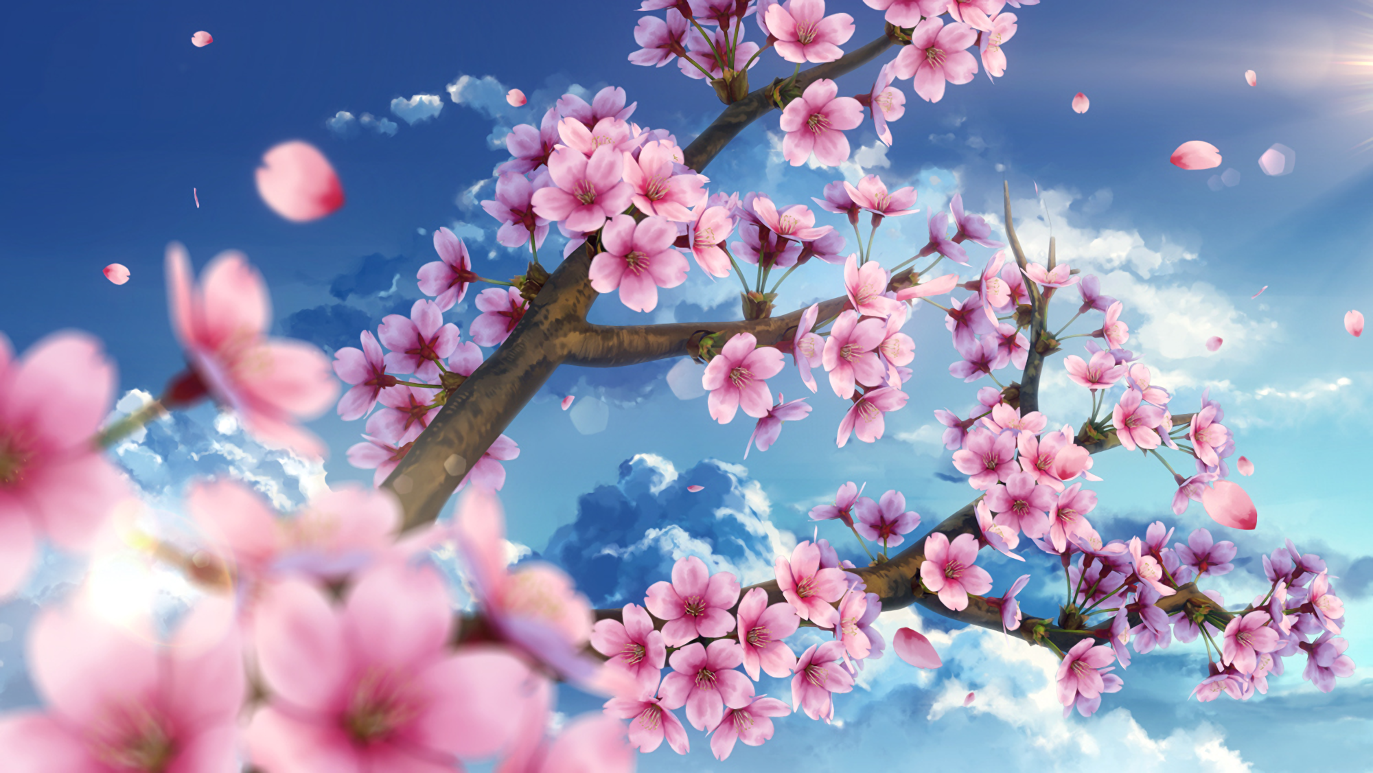 Original hd wallpaper background image 2000x1126 id - Anime cherry blossom wallpaper ...
