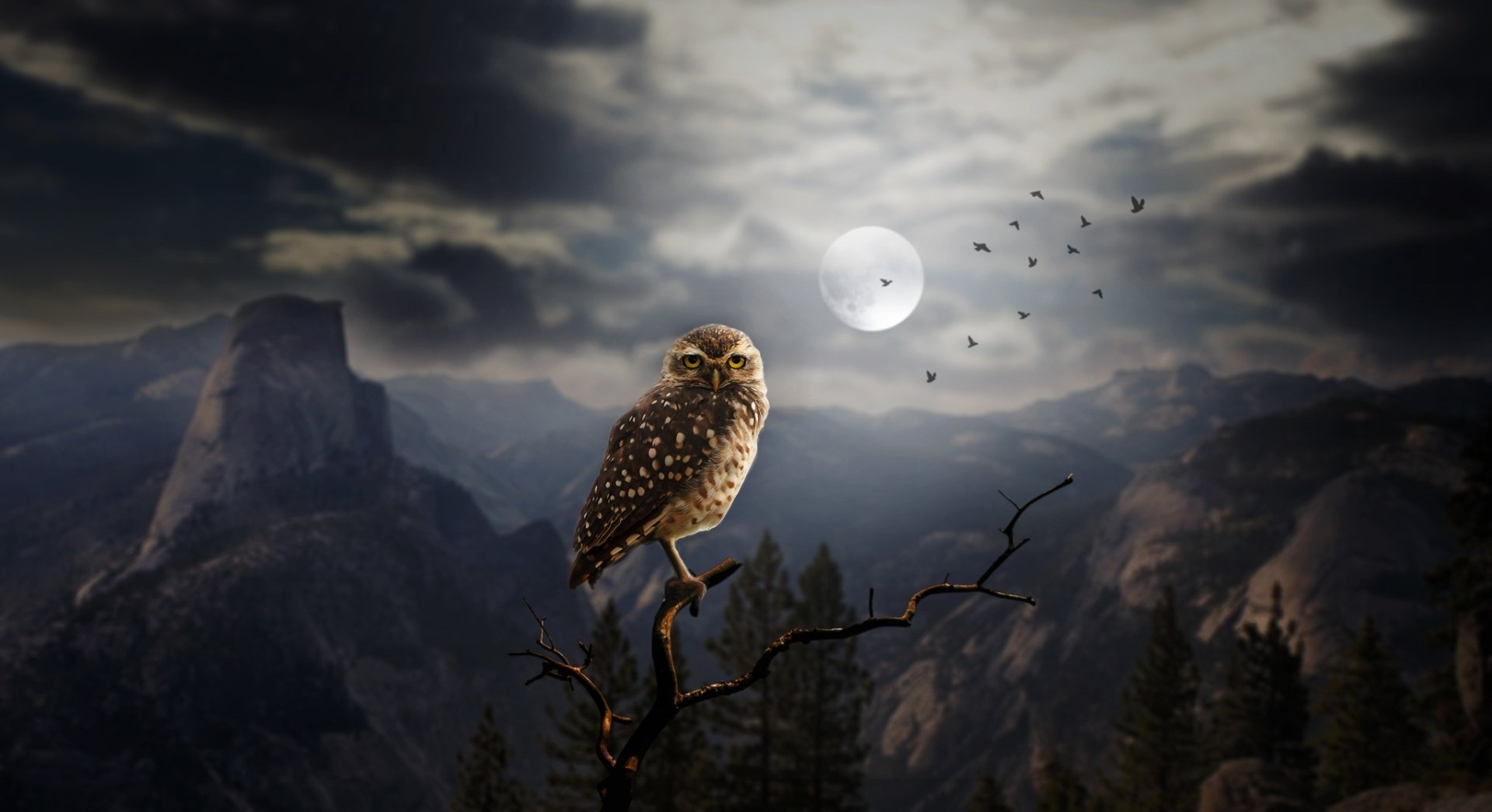 Animal - Owl  Bird Manipulation Moon Wallpaper