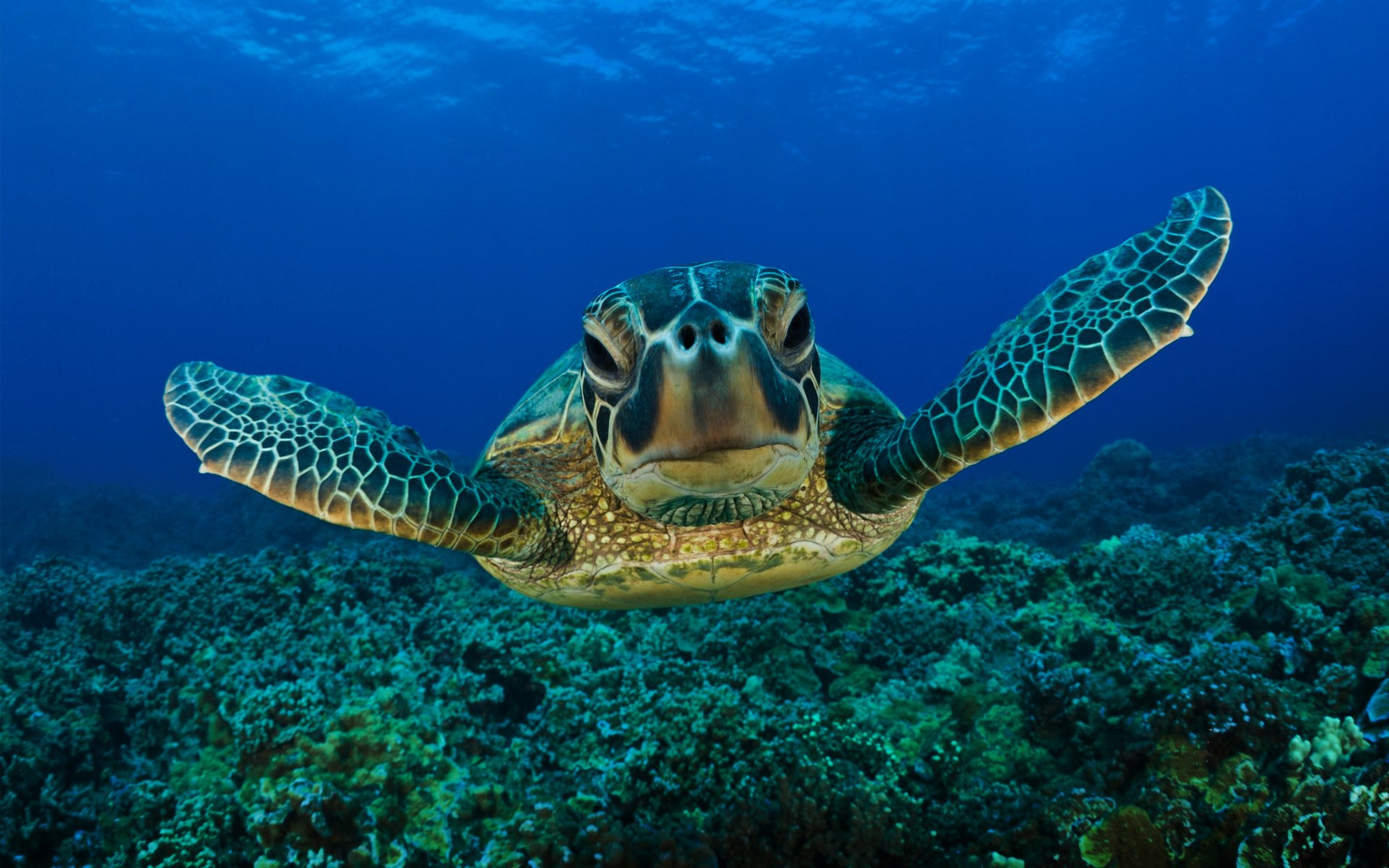 258 Turtle Hd Wallpapers Background Images Wallpaper Abyss