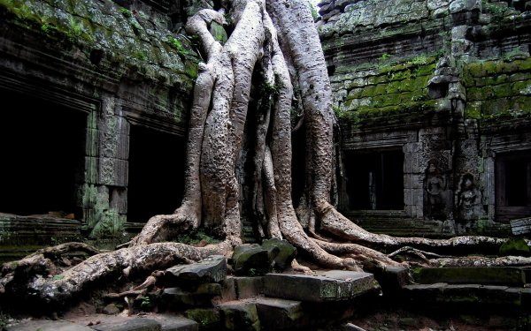 Religious Ta Prohm Temples Tree Roots Earth HD Wallpaper | Background Image