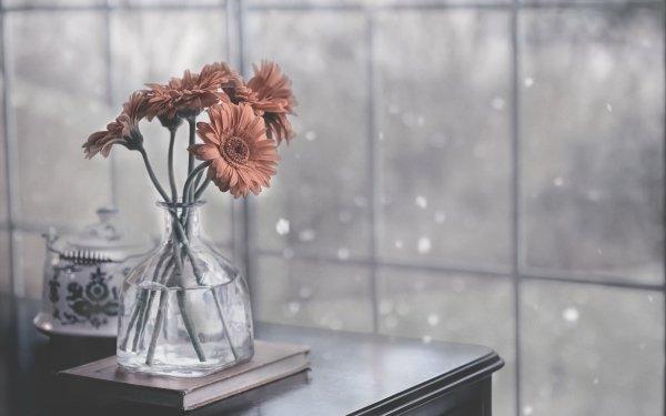 Photographie Nature Morte Fleur Vase Gerbera Peach Flower Fond d'écran HD | Image