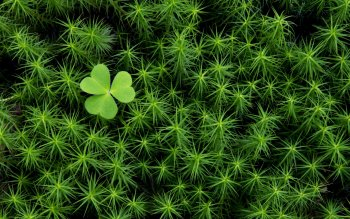 Earth - Clover Wallpapers and Backgrounds ID : 84022