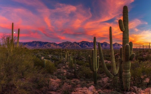 Earth Desert Cactus Arid Sunset Landscape HD Wallpaper | Background Image