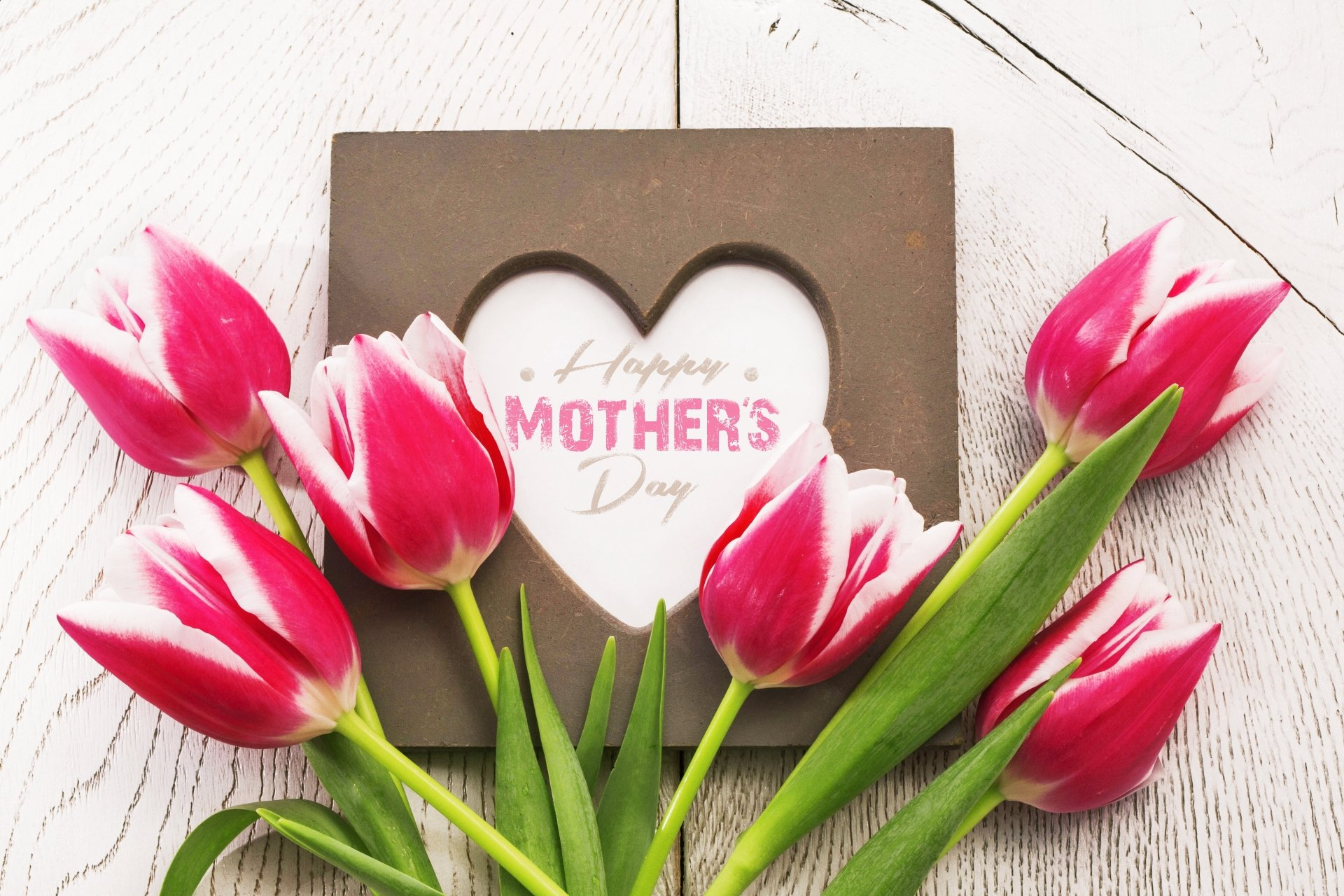 Holiday - Mother's Day  Flower Tulip Pink Flower Wallpaper