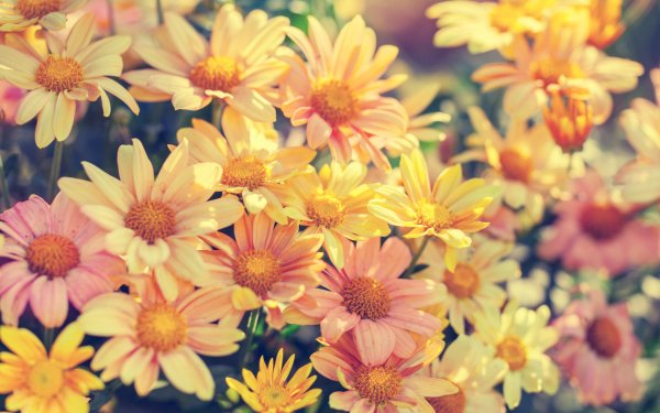 Earth Flower Flowers HD Wallpaper   Background Image