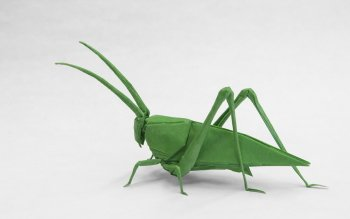 36 Grasshopper HD Wallpapers