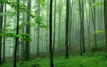 Earth - Forest Wallpapers and Backgrounds ID : 8682