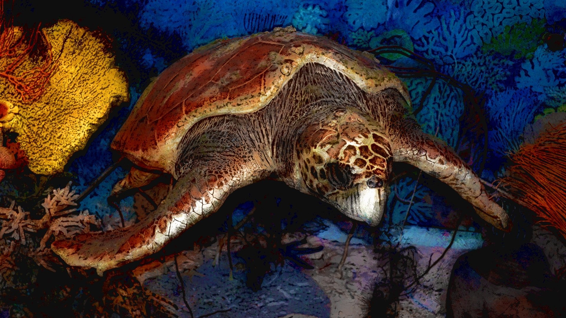 Animal - Turtle  Artwork Artistic Illustration Wallpaper