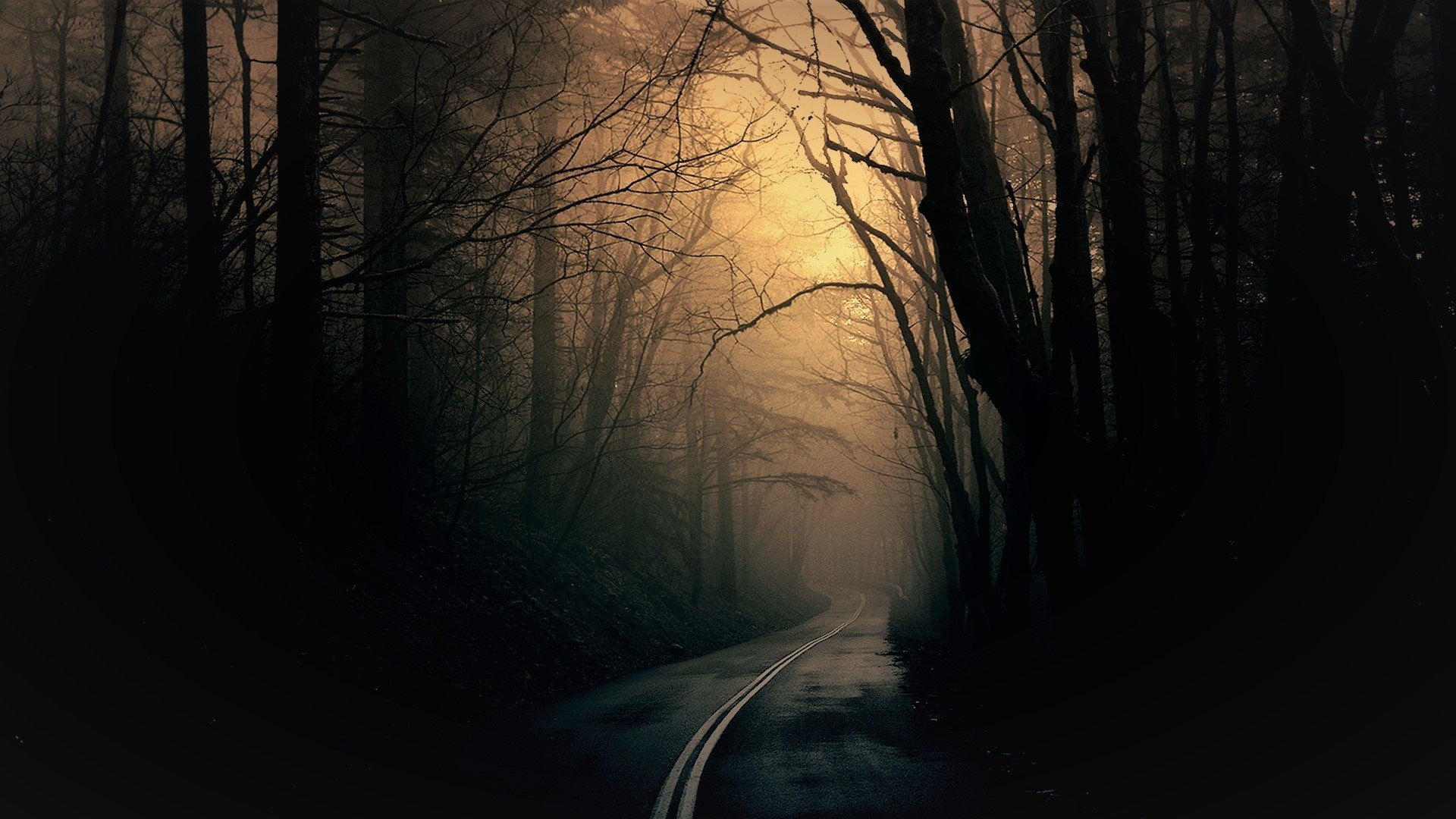 Dark Forest Road Full HD Wallpaper And Background Image