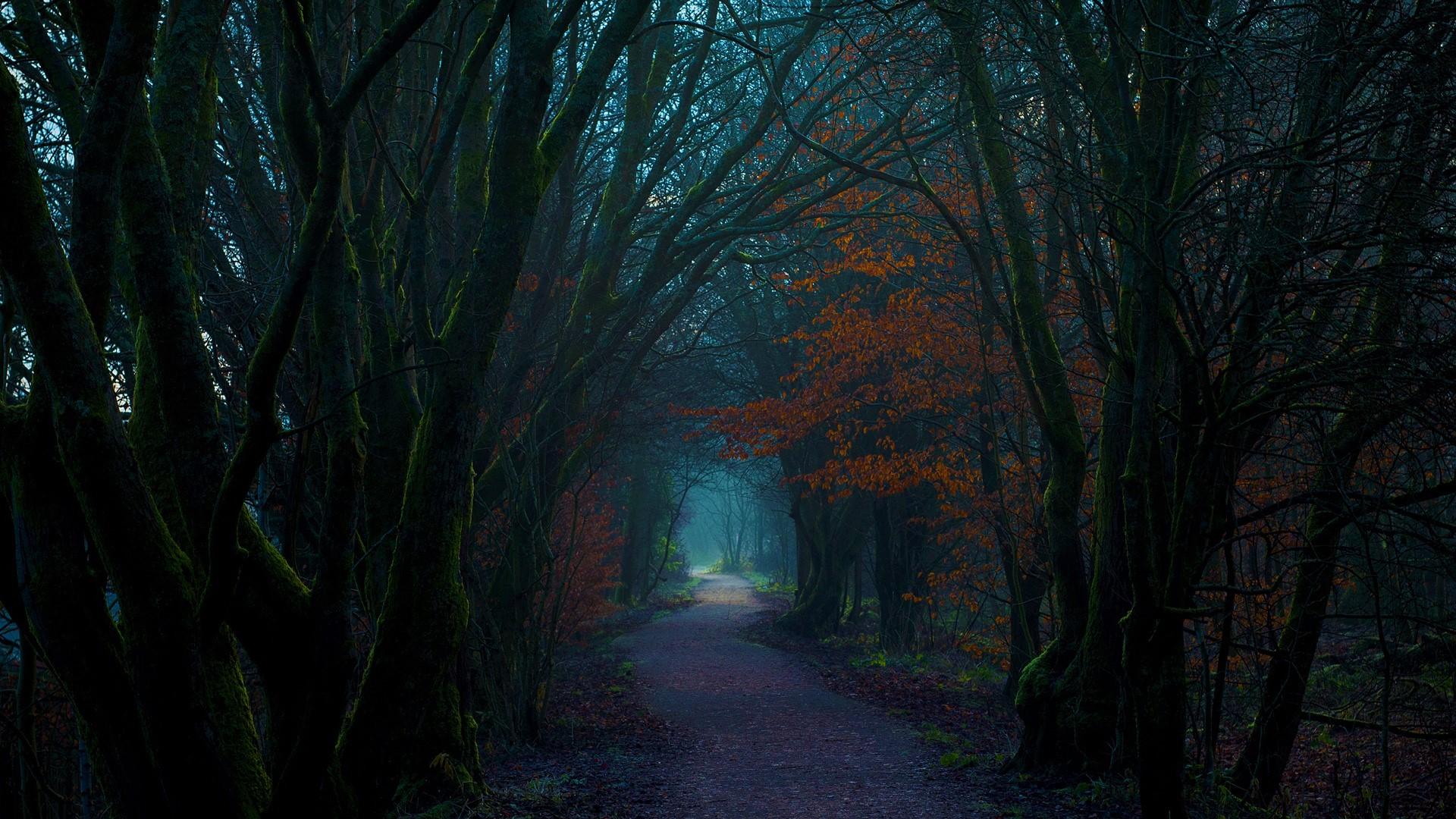 dark autumn forest path hd wallpaper background image