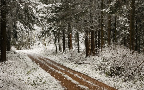 Earth Winter Dirt Road Path Forest Pine Snow HD Wallpaper | Background Image