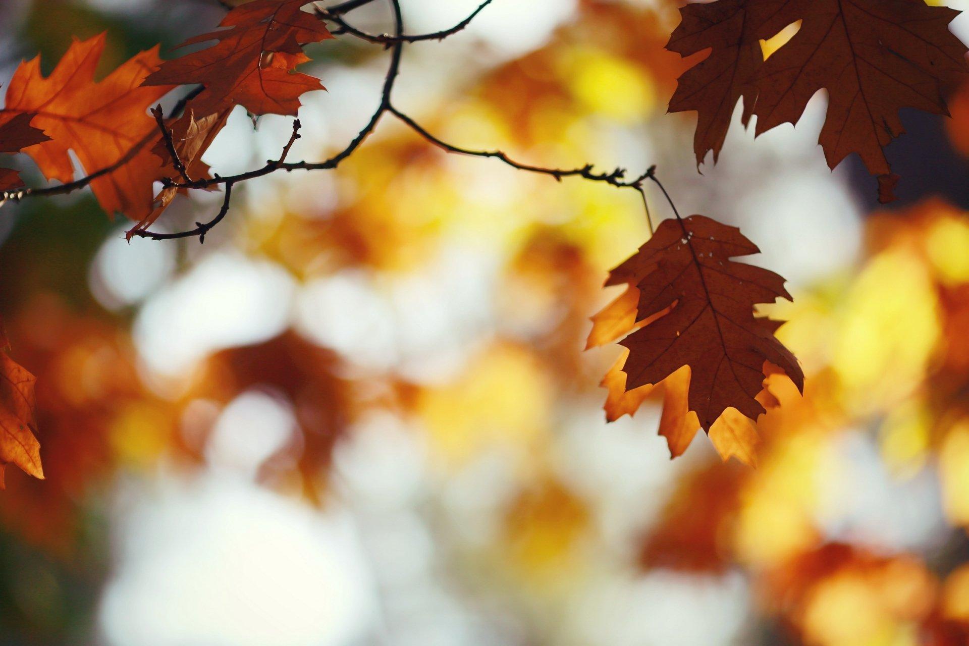 Earth - Leaf  Nature Depth Of Field Fall Wallpaper