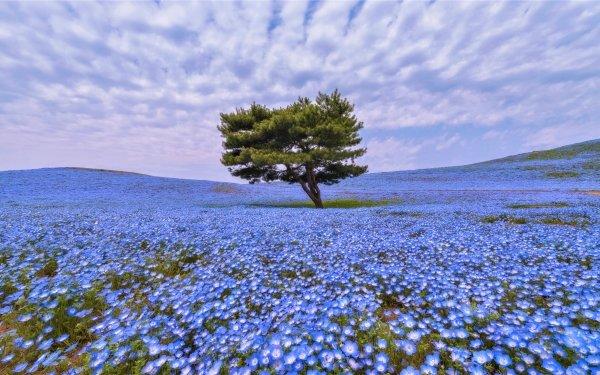Earth Tree Trees Field Flower Blue Flower HD Wallpaper | Background Image