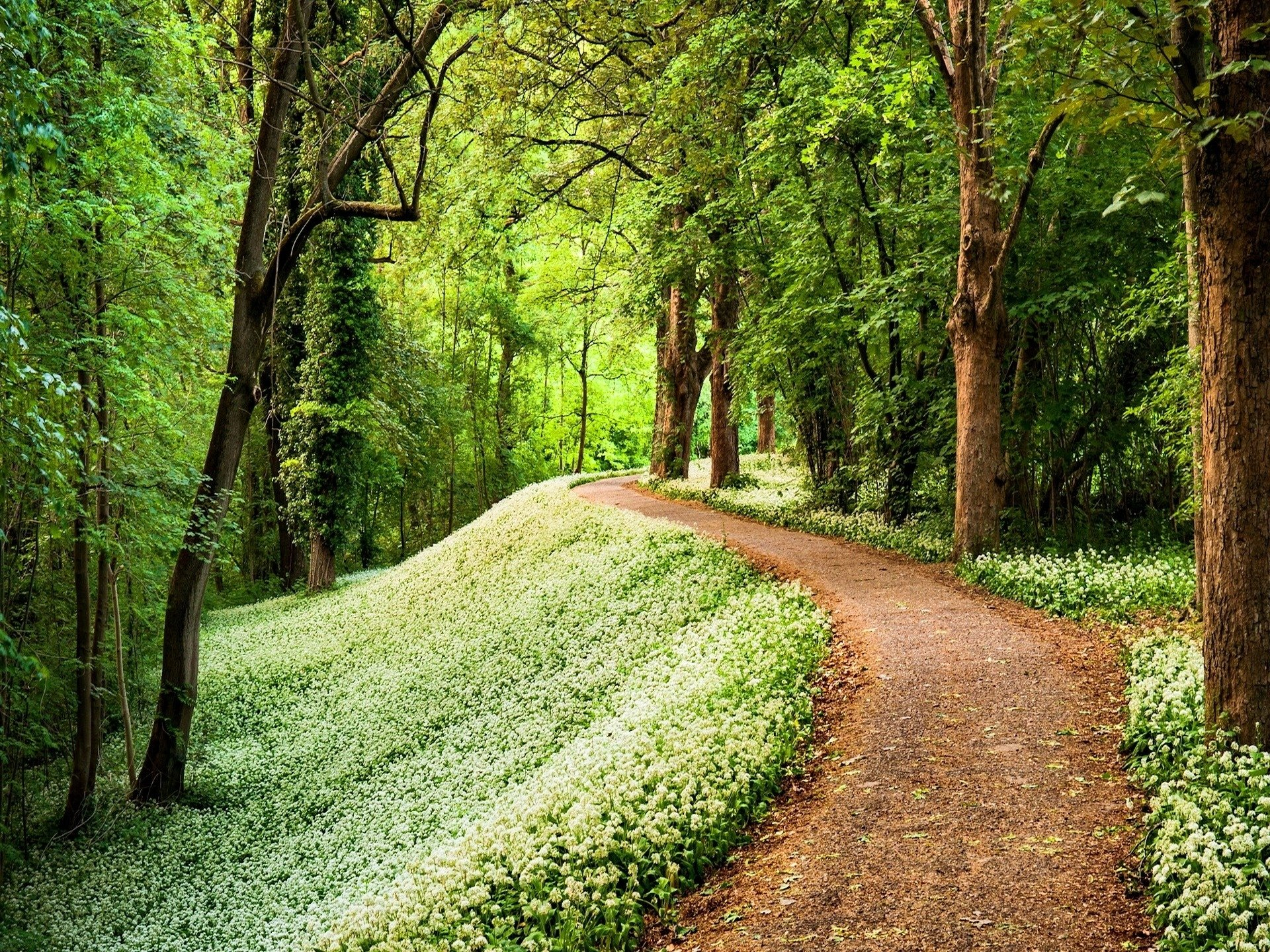 Earth - Path  Nature Forest Flower Tree Wallpaper