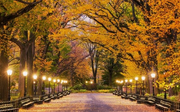 Man Made Central Park Fall Light Park Lamp Post New York HD Wallpaper | Background Image