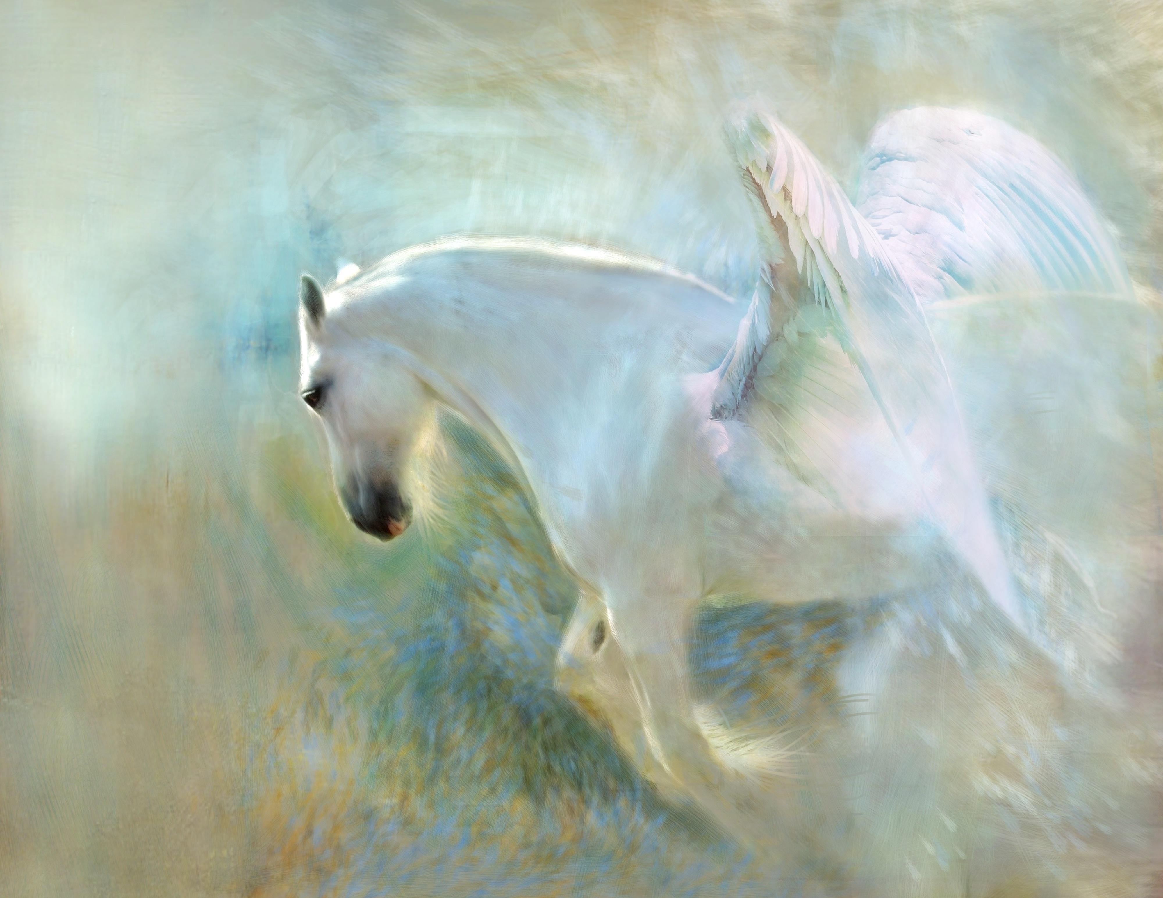 White Horse With Wings 4k Ultra Fondo De Pantalla Hd Fondo De Escritorio 4000x3088 Id 888977 Wallpaper Abyss