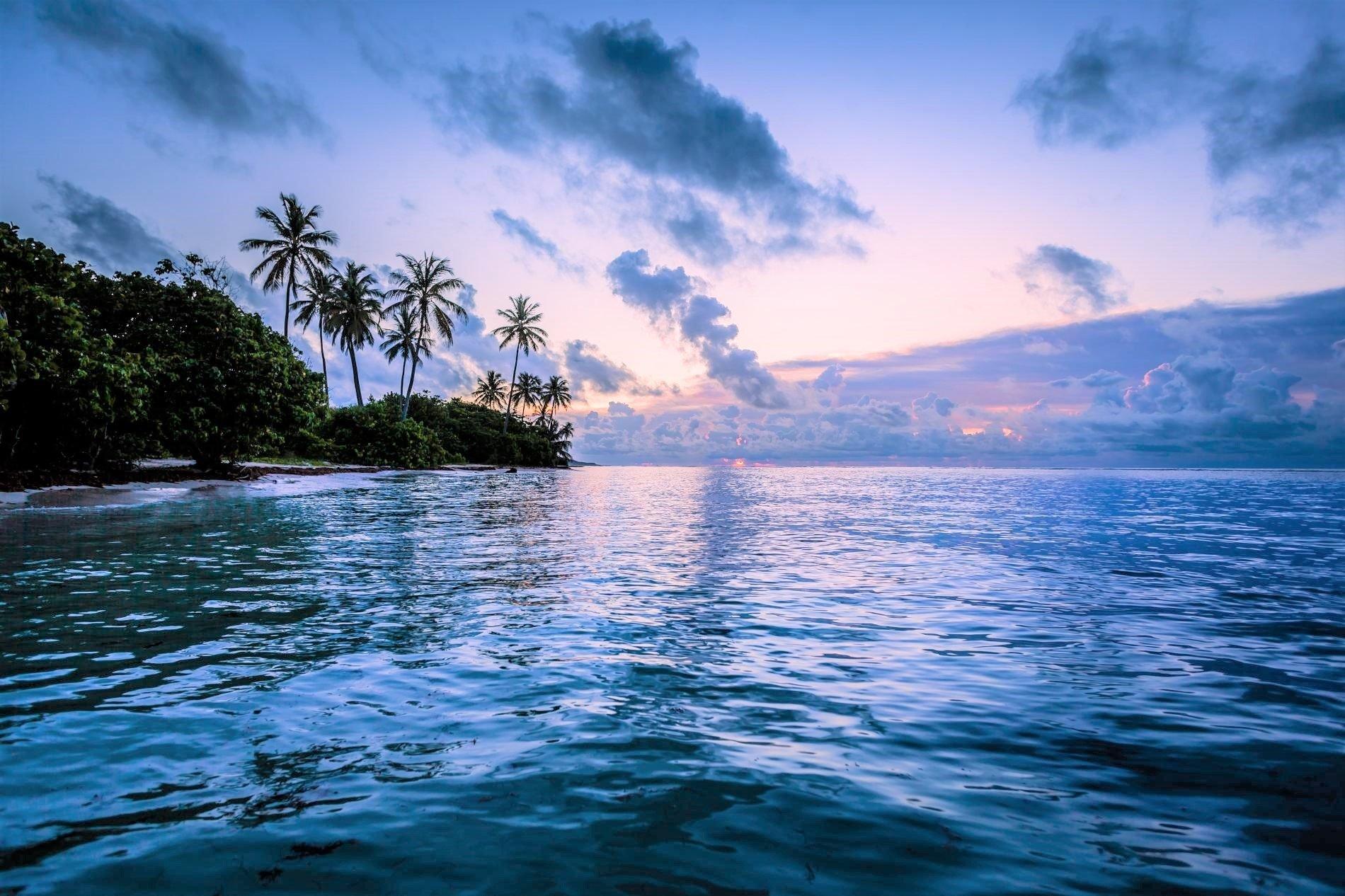 Earth - Ocean  Palm Tree Tropical Sunset Earth Sea Horizon Beach Wallpaper