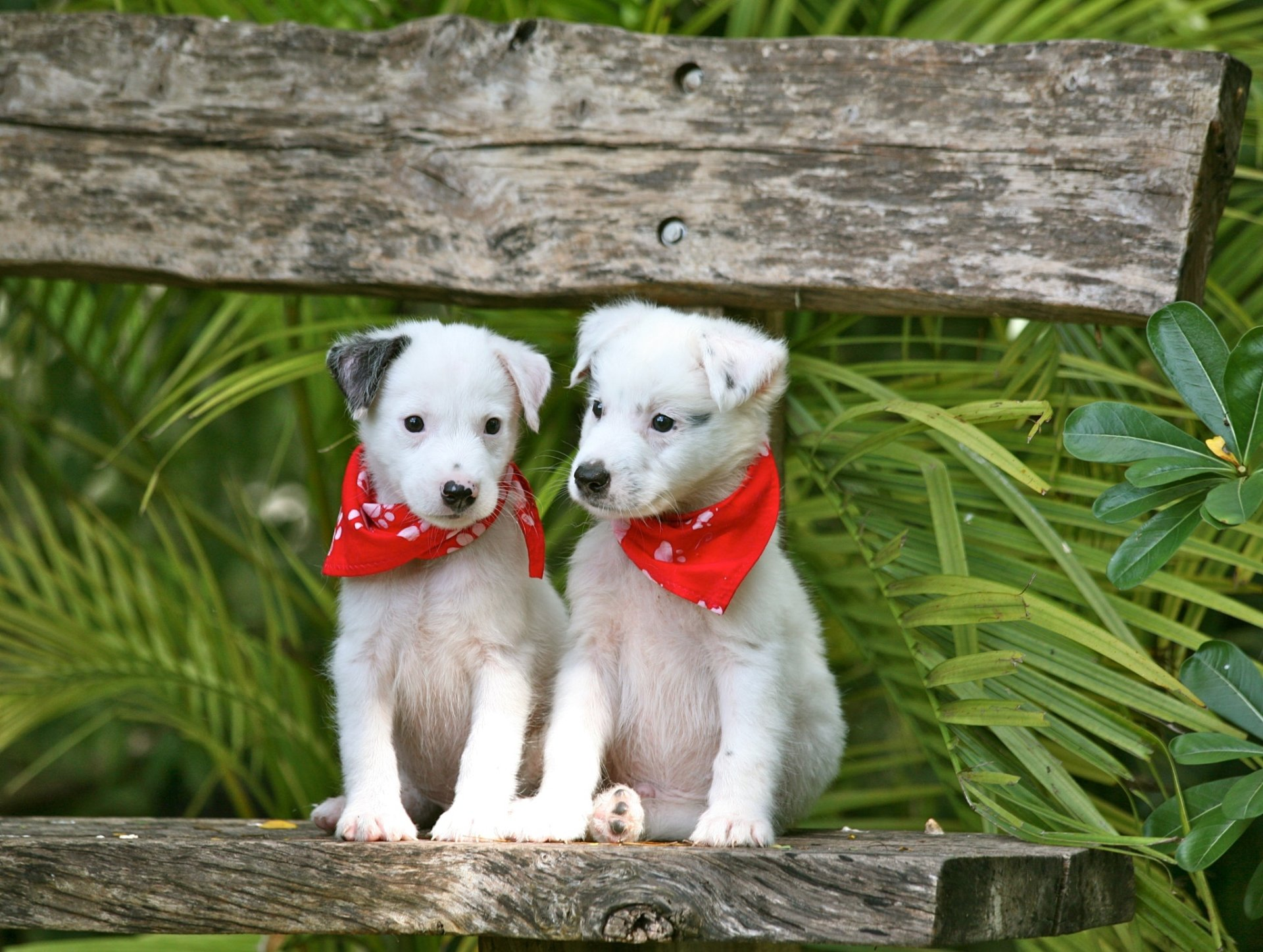 Animal - Puppy  Dog Pet Baby Animal Wallpaper