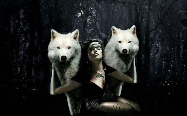 Artistic Photoshop Forest Wolf White Wolf Manipulation HD Wallpaper   Background Image