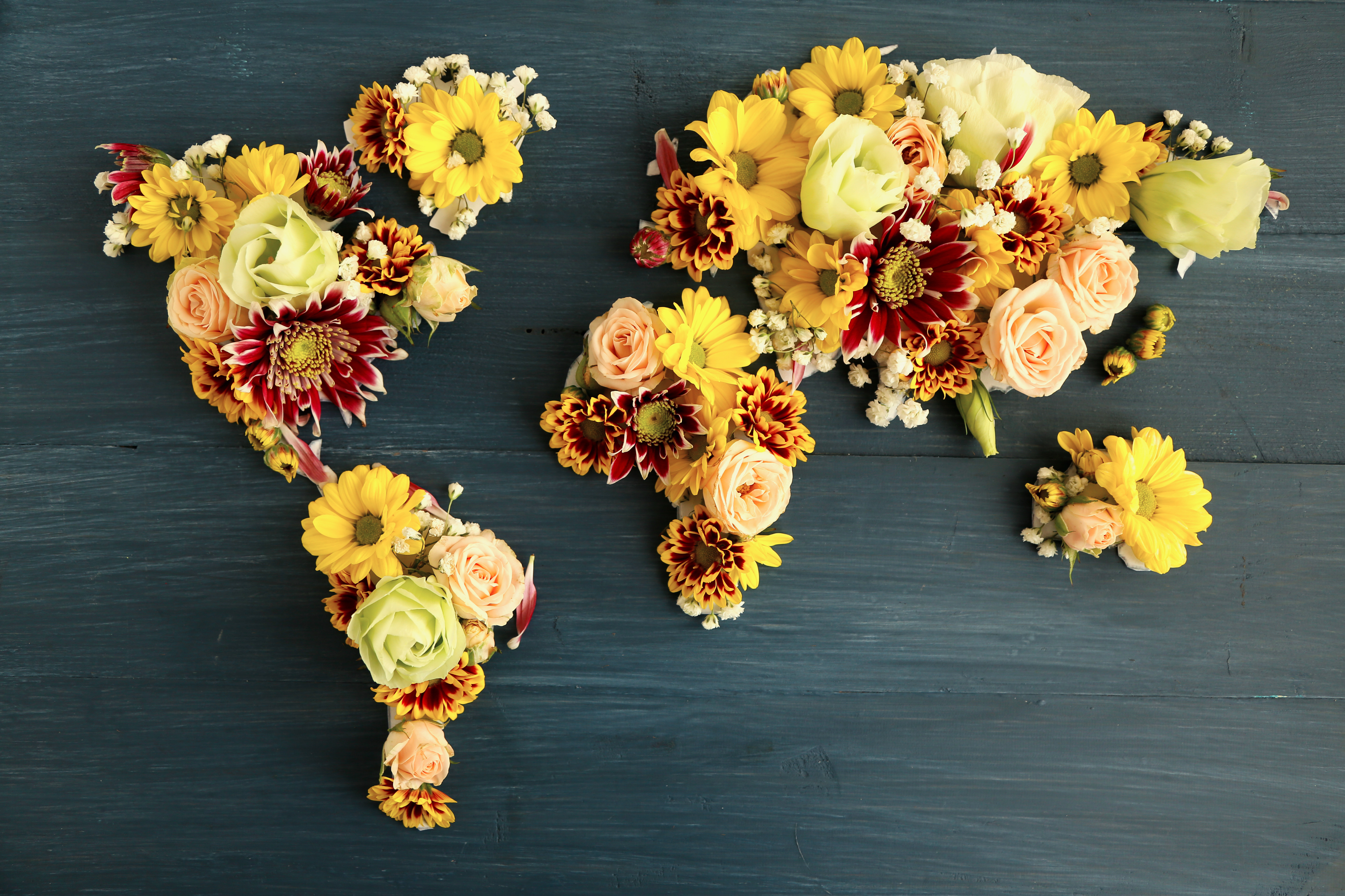 World map 5k retina ultra hd wallpaper and background image misc world map flower wallpaper gumiabroncs Images