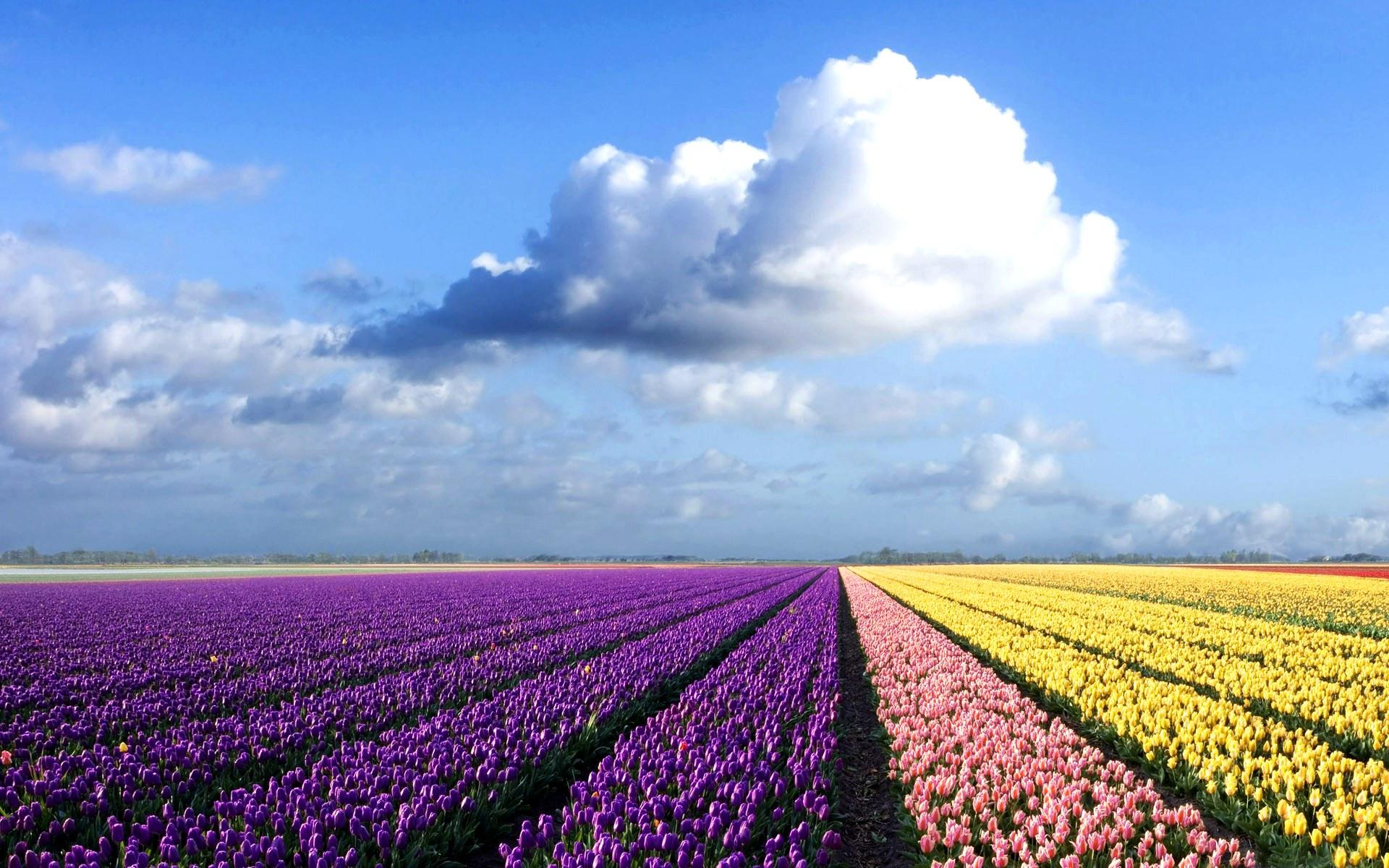 Earth - Flower  Wallpaper