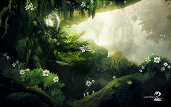 Video Game - Guild Wars 2 Wallpapers and Backgrounds ID : 91192