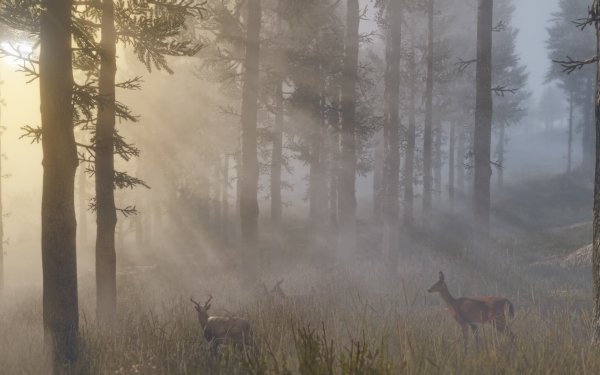 Video Game Red Dead Redemption 2 Red Dead Red Dead Redemption Forest HD Wallpaper | Background Image
