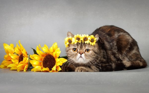 Animal Cat Cats Pet Sunflower HD Wallpaper | Background Image