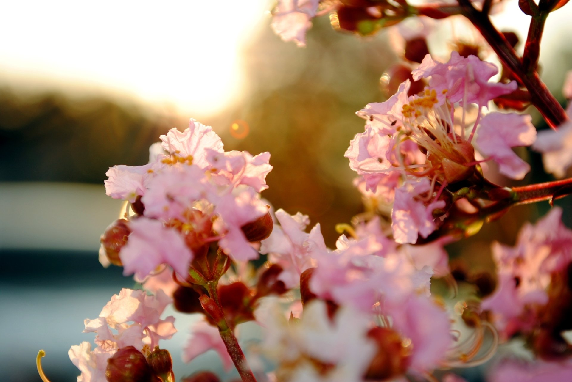Earth - Blossom  Spring Pastel Wallpaper