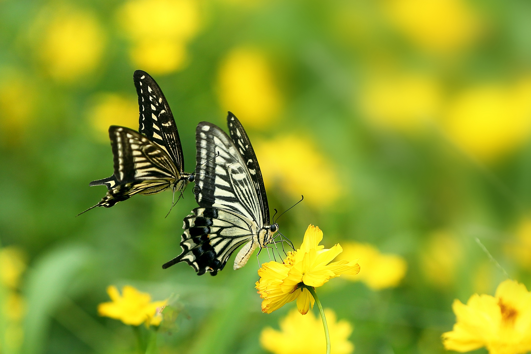 Butterfly HD Wallpaper | Background Image | 2048x1366 | ID ...