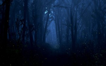 Fantasy - Forest Wallpapers and Backgrounds ID : 96360