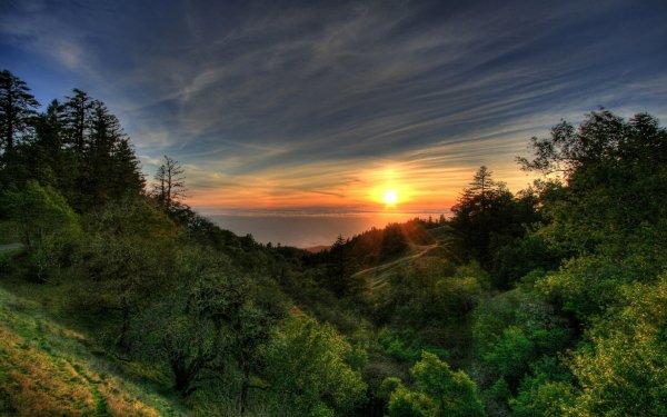 Earth Landscape Sunset Forest Shore HD Wallpaper | Background Image