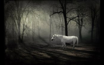 Fantasy - Einhorn Wallpapers and Backgrounds ID : 97060