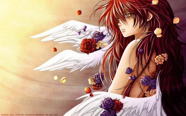 Anime 11th Cat Angel HD Wallpaper   Background Image