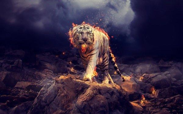 Fantasy Tiger Fantasy Animals White Tiger Flame HD Wallpaper   Background Image